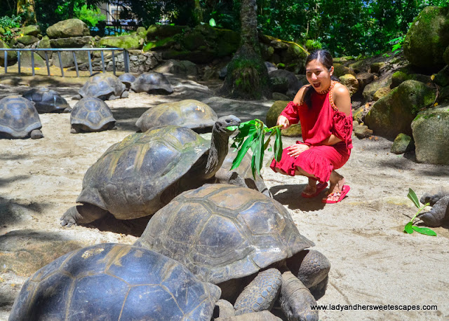 where to see giant tortoise in Seychelles