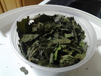 Storing dehydrated mint leaves.