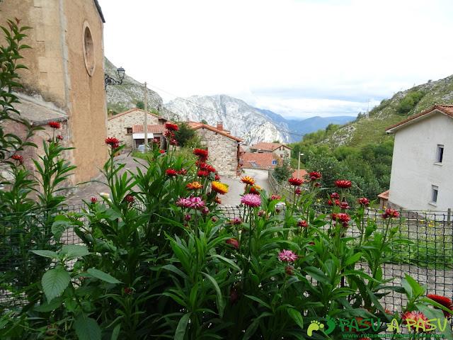 De Urdón a Tresviso: Flores en Tresviso