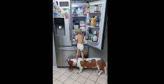Niño y perro en la heladera
