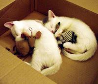 Kucing Lucu Tidur Sembarangan Dimana Saja