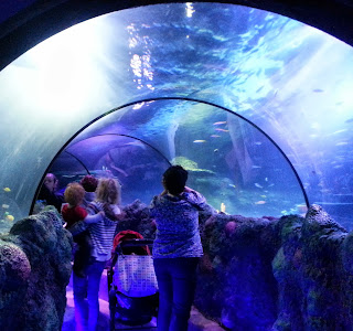 Glass tunnel tank SeaLife Manchester Trafford Centre
