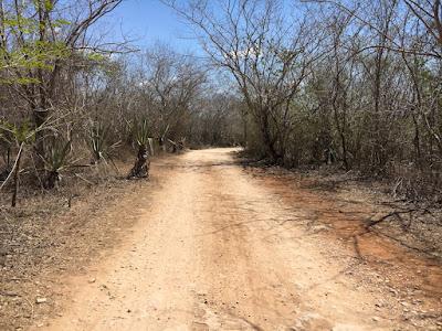 Sur le chemin des cenotes d'Homun