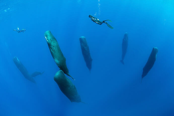 Amazingly Rare Pictures And Video Of Sperm Whales Sleeping