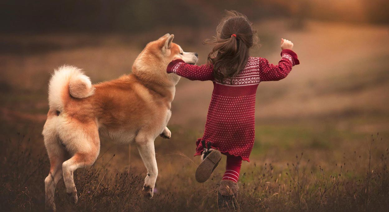 Young girl in a red woollen dress runs with a Shiba Inu dog away from camera