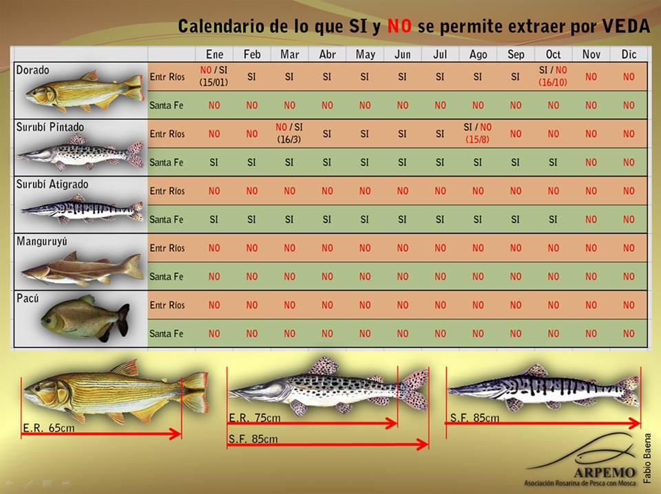 Calendario De Pesca.Area De Pesca Calendario De Vedas Y Especies Prohibidas En Santa Fe