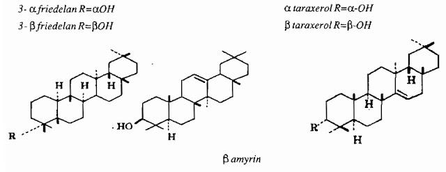 TPHH Xương Rồng - Euphorbia antiquorum - Nguyên liệu làm thuốc Chữa bệnh Mắt Tai Răng Họng