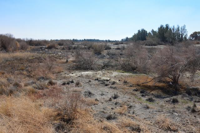"""réserve """"humide"""" d'Azraq"""