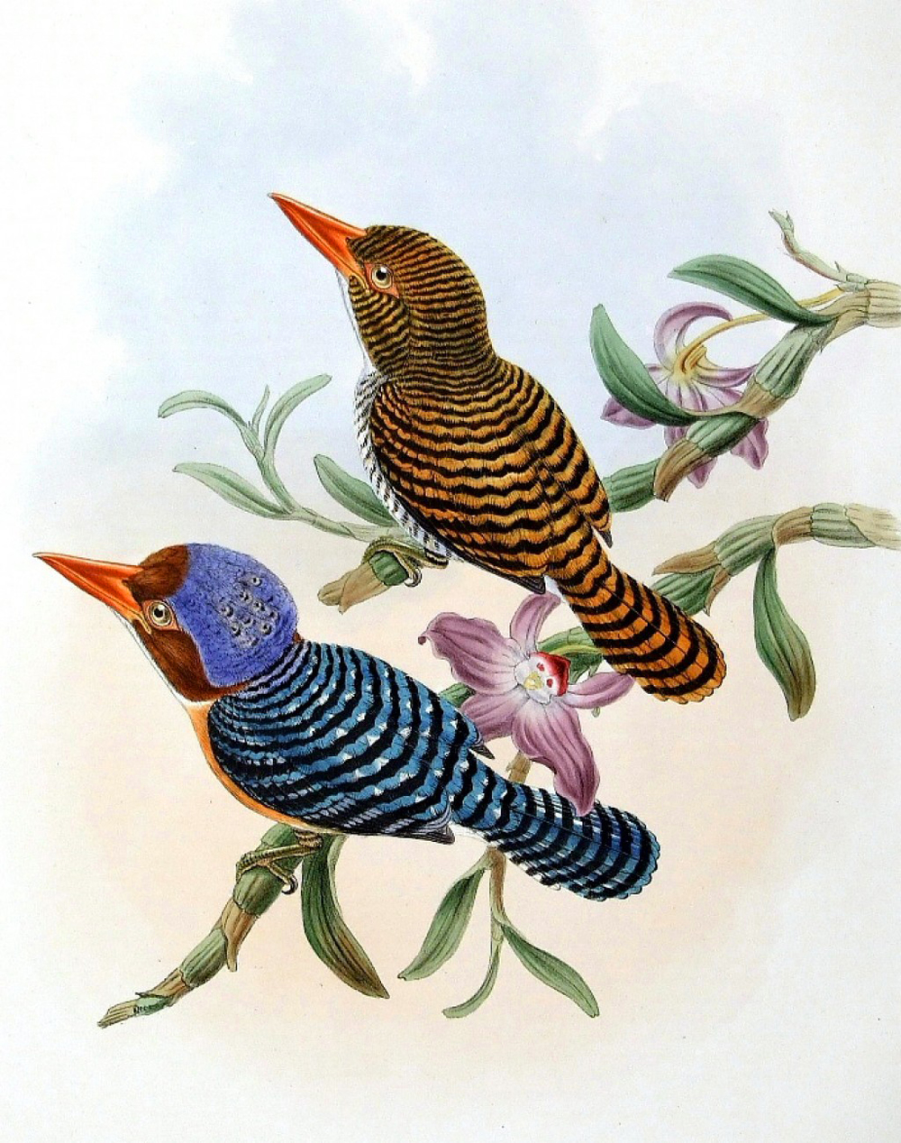free clipart of vintage birds - photo #4