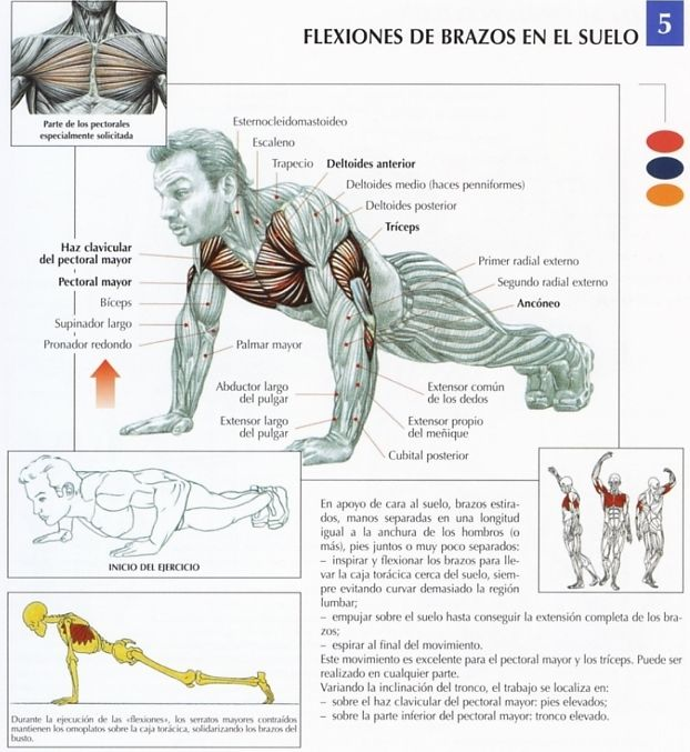 Rutinasbodyfitness rutina pecho triceps cardio for Plank muscles worked diagram