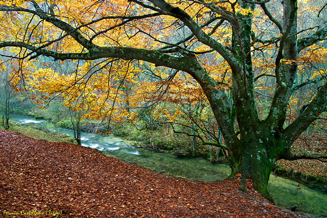 Haya otoño y río