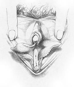 Жіночі статеві органи фото 10