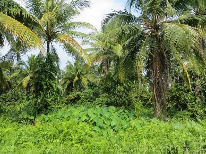 Много зелени Таиланд