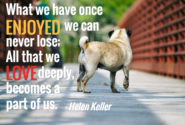 Comforting Quotes about Losing a Dog - Doglopedix