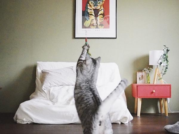 ダ・バードを手で捕まえたサバトラ猫