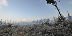 Kondisi rerumputan yang diselimuti es tipis di Dieng, Wonosobo, Jawa Tengah.   Foto : Merdeka. http://www.merdeka.com/foto/peristiwa/dinginnya-udara-dieng-sampai-embun-berubah-jadi-es.html
