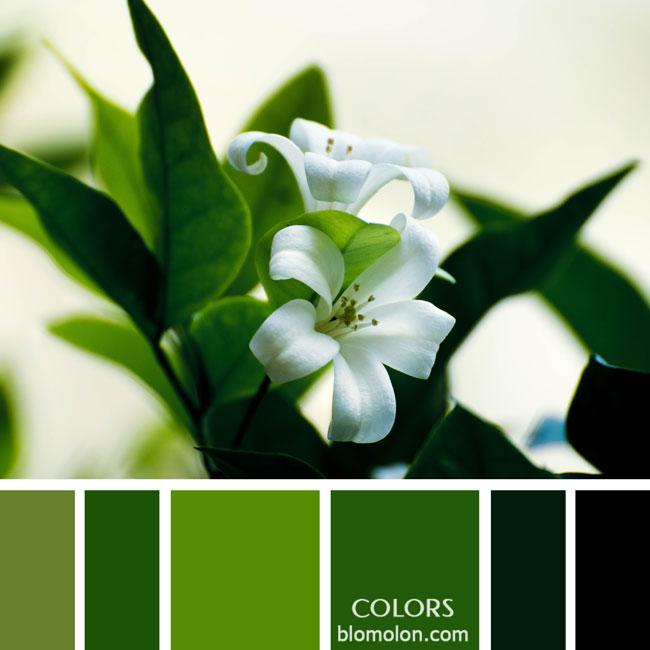 variedad_en_color_paletas_de_colores_13