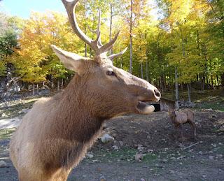 Buck at Omega Park