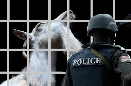 Police In Kwara Detains Goat Accused of Armed Robbery