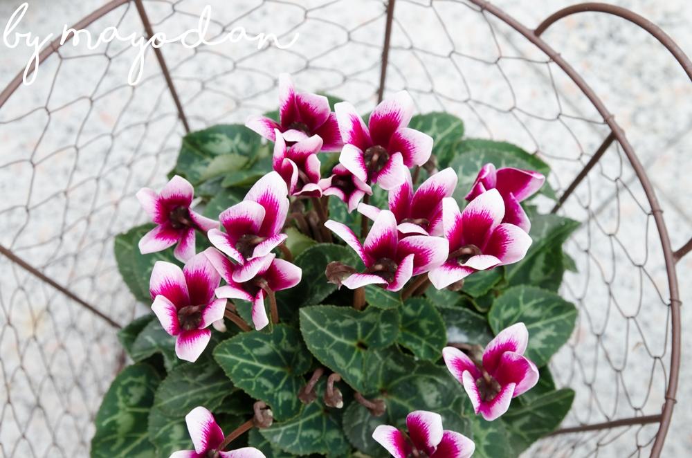 wie man die outdoorsaison im wintergarten verl ngern kann mayodans home garden crafts. Black Bedroom Furniture Sets. Home Design Ideas