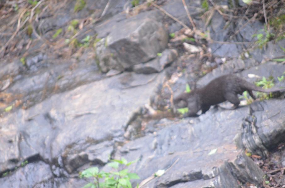 Otter DSLR
