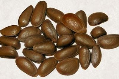 Cómo y Cuándo sembrar semillas de chirimoya?