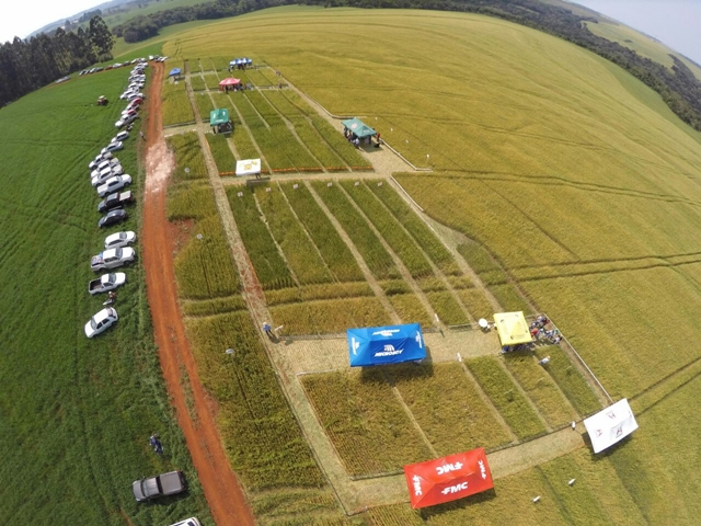 """Agroexata organiza """"III Manha de Campo: Trigo"""", realizado na Fazenda Rio Can Can, em Roncador"""