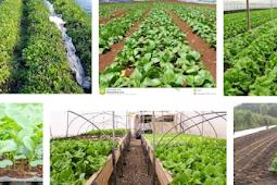 Dampak program pertanian pada peningkatan status gizi belum terbukti