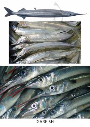 Sardine Fish In Tamil
