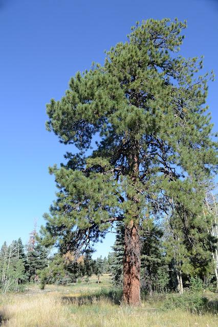 big tree standing and live