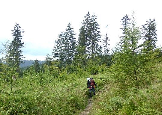 W drodze na Przełęcz Kubalonka.