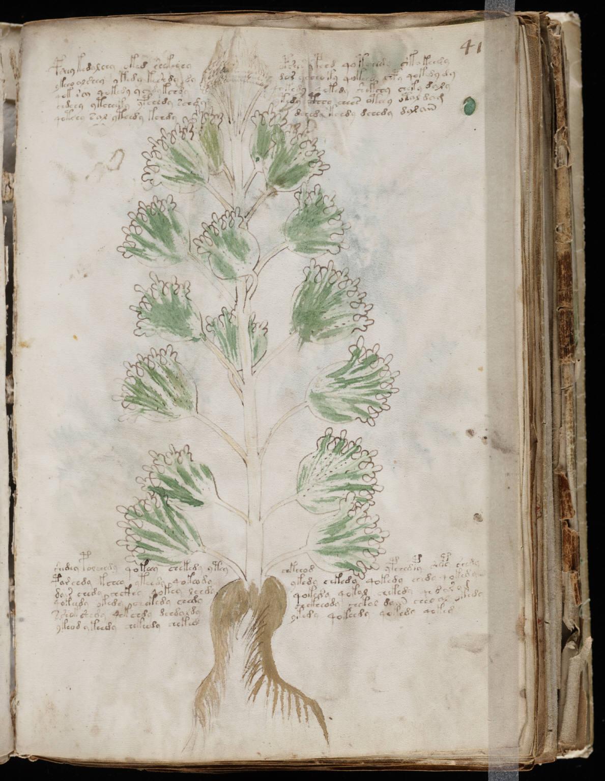 manuscrito079