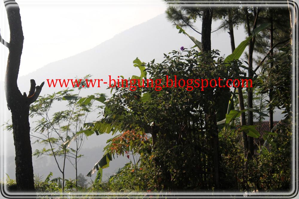 Villa pondok cemara gunung bunder