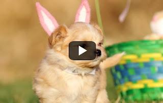 Υπέροχο βίντεο με πασχαλινά κουταβάκια; Γίνεται! [video]