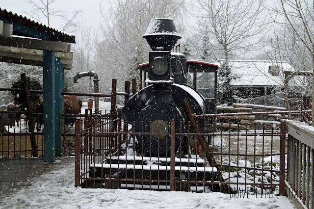 Bisons Erlebnis-Zoo Hannover