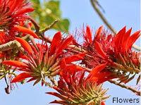 Erabadu Flowers