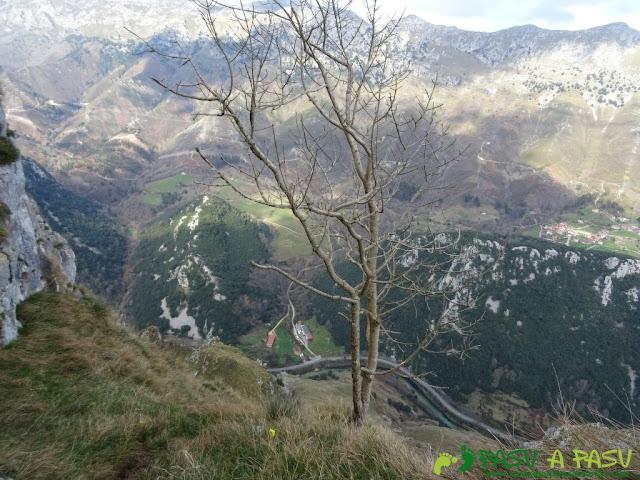 Ruta a la Pica de Peñamellera: Arbol en la terraza de la cara norte