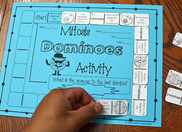 Mitosis Dominoes Activity