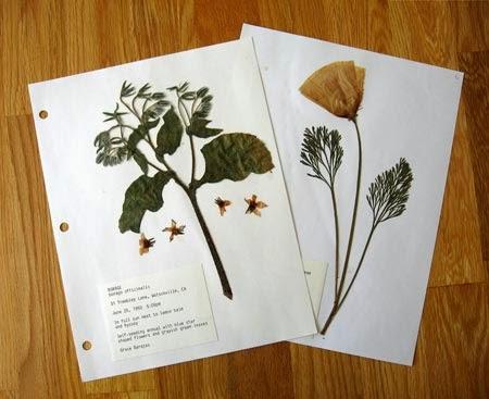 Simple herbarium