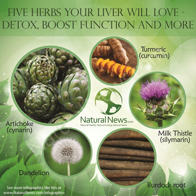 Infographic-Five-Herbs-Your-Liver-Will-Love