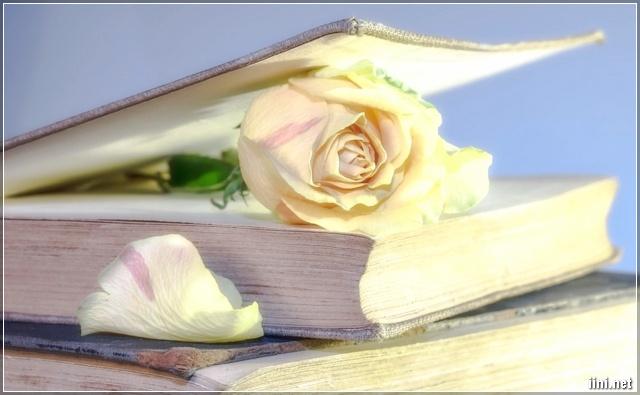 ảnh hoa hồng trắng và cuốn sách
