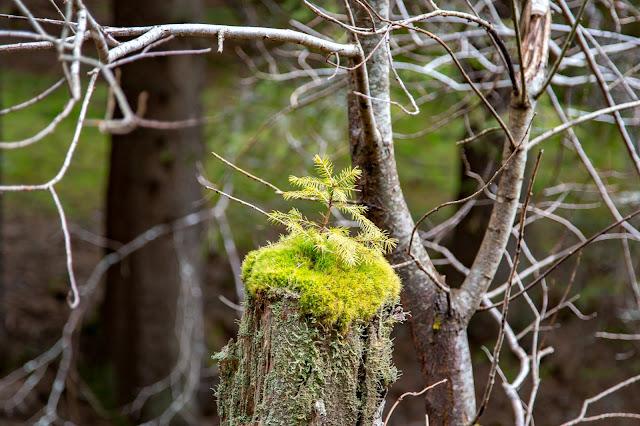 Auf vergessenen Wegen von Finsterau nach Buchwald  Wandern im Bayerischen Wald  Wanderung Nationalpark Bayerischer Wald 08