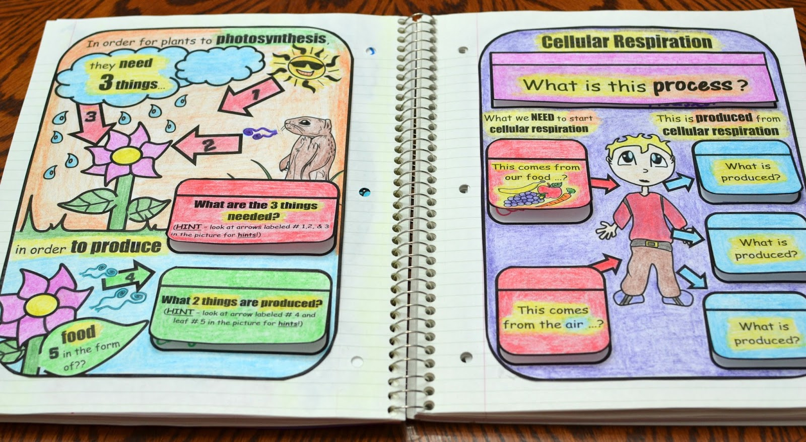 Science Interactive Notebook Cells