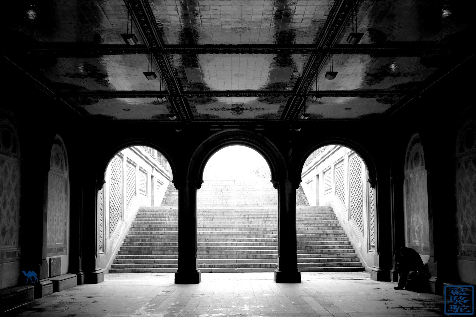 Le Chameau Bleu - Photography New York USA - Central Park USA