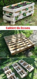plantar frutillas fresas en palets de madera