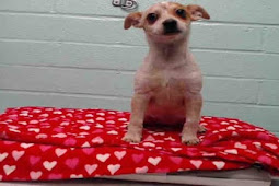 3 month old pup surrendered to shelter with her favorite red blanket, has sadness written on her face