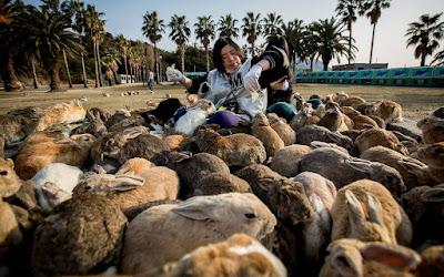 isla_llena_de_conejos_okunoshima