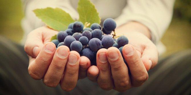 Khasiat buah Anggur menurut Al Quran