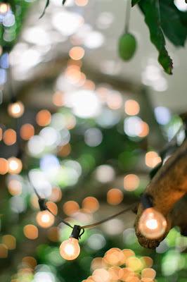 Iluminacion para boda en un jardín