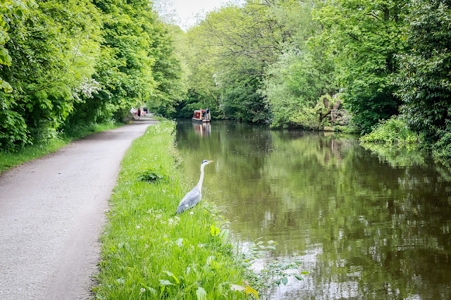 Dog Friendly Saltaire